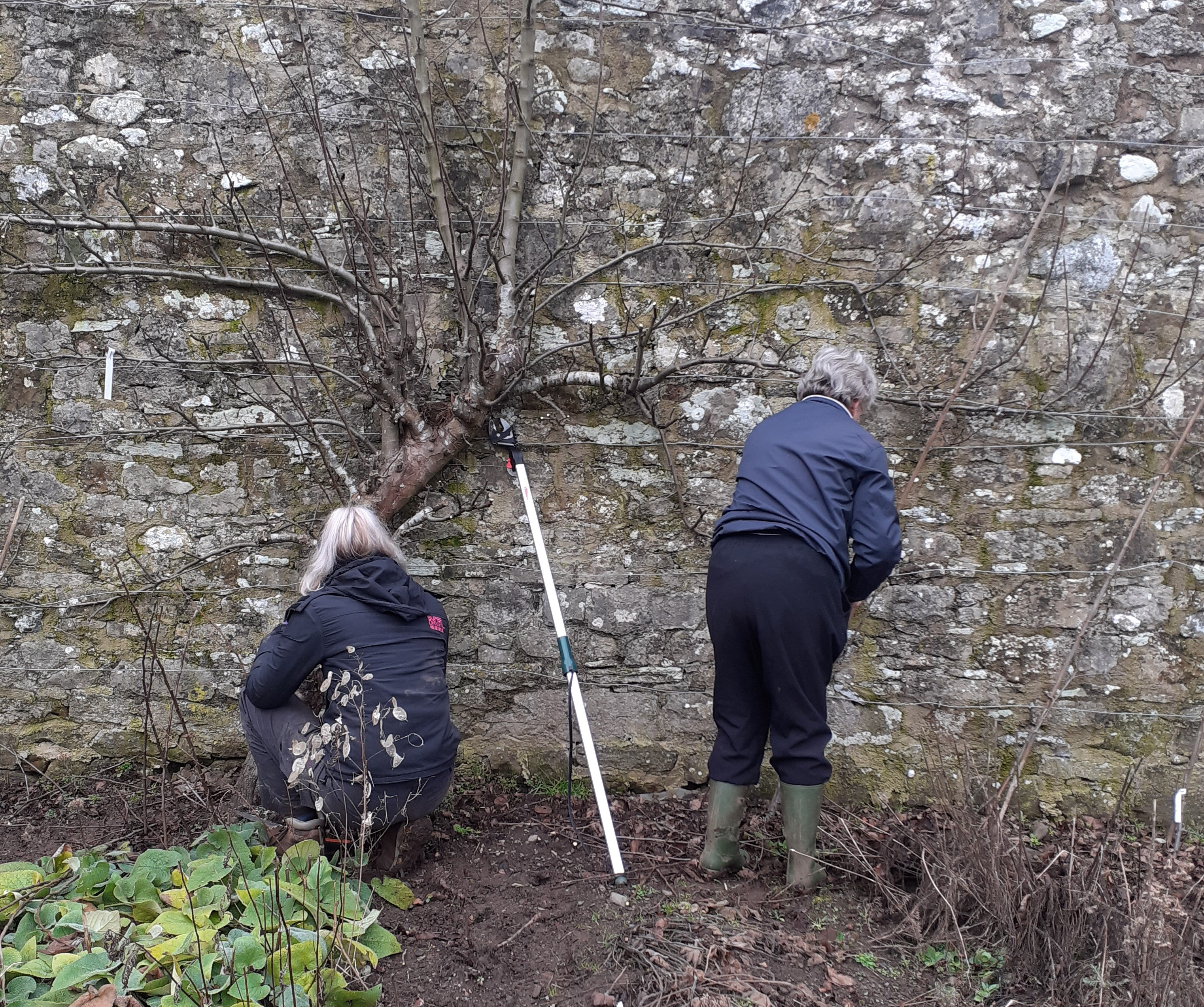 Pruning the Apple Trees